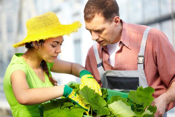 Farming - Stock Photo - Images