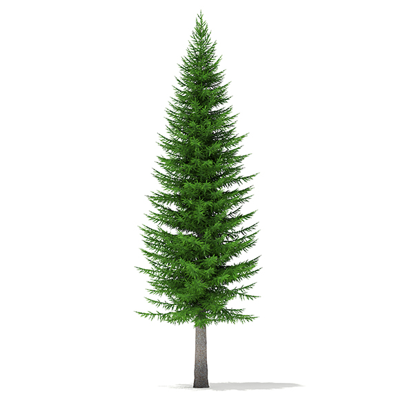 Norway Spruce (Picea abies) 11.3m - 3DOcean Item for Sale