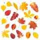 Download Set of colorful autumn leaves from PhotoDune