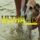 Bathing a Dog 2 - VideoHive Item for Sale