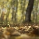 Autumn Leaves In The Park - VideoHive Item for Sale