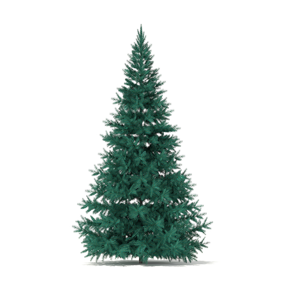 Blue Spruce (Picea pungens) 3.2m - 3DOcean Item for Sale