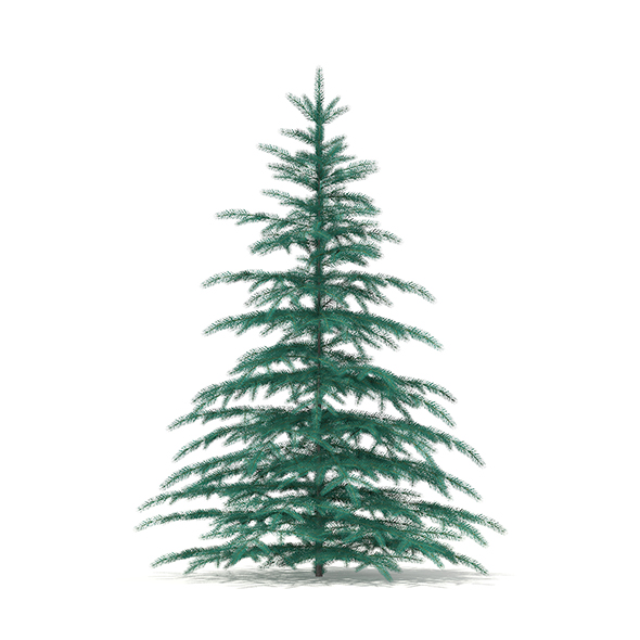 Blue Spruce (Picea pungens) 2.6m - 3DOcean Item for Sale