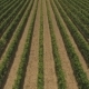 Flying Over Countryside With Vineyards - VideoHive Item for Sale
