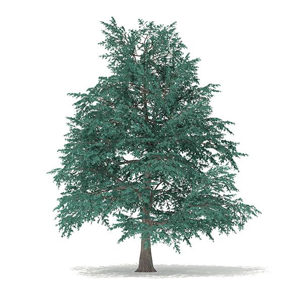 Blue Atlas Cedar (Cedrus atlantica) 9.6m - 3DOcean Item for Sale