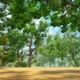 Nature Backdrop V2 - VideoHive Item for Sale
