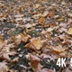 In Autumn Forest - VideoHive Item for Sale
