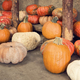 Pumpkins - PhotoDune Item for Sale