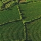 Aerial Top View of Rice Fields in Bali Surrounded by Jungle - VideoHive Item for Sale