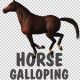 Horse Gallop Loop - VideoHive Item for Sale