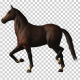 Horse Canter Loop - VideoHive Item for Sale