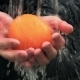 Water Flows On Yellow Orange In Hands Of Man - VideoHive Item for Sale