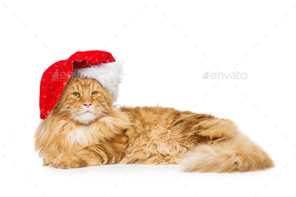 Big ginger cat in christmas hat - Stock Photo - Images