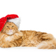 Big ginger cat in christmas hat - PhotoDune Item for Sale