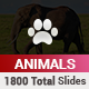 Animals PowerPoint Presentation Template - GraphicRiver Item for Sale
