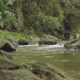 River In Tropical Forest - VideoHive Item for Sale