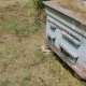 Bees At Hives On Meadow . New Harvest - VideoHive Item for Sale