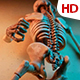 Human Skeleton 0182 - VideoHive Item for Sale