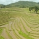 Rice Fields In The Philippines - VideoHive Item for Sale