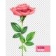Rose and Petals Transparent Set