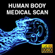 Human Body Medical Sagittal Scan - VideoHive Item for Sale