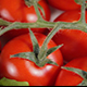 Tomato Vegetables - VideoHive Item for Sale