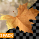 Leaves Transitions - VideoHive Item for Sale