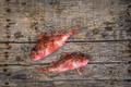 Red mullet raw fish - PhotoDune Item for Sale