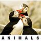 25 Animals Photography Lightroom Presets - GraphicRiver Item for Sale