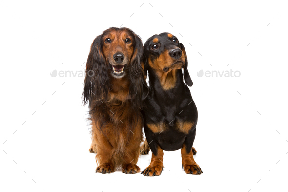pets - Stock Photo - Images