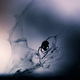 spider silhouette against the web - PhotoDune Item for Sale