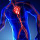 Vascular System Medical Scan