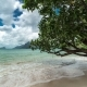 Tree Leaned Off The Coast Of Las Cabanas Beach.   - August 2016, El Nido Palawan, Philippines - VideoHive Item for Sale