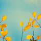 Fall tree leafs background - PhotoDune Item for Sale