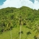 Rainforest And Jungle. Palm Trees. Philippines. - VideoHive Item for Sale
