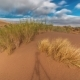 Sand Dune And Saxaul In The National Park Altyn Emel - VideoHive Item for Sale