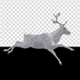White Reindeer - Passing Screen - Side View - 4K - VideoHive Item for Sale