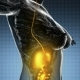 Human Body With Visible Digestive System - VideoHive Item for Sale