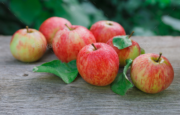 Red and yellow apples harvest in fall garden - Stock Photo - Images