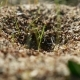 Ant Ants Insects On Nature The Earth Movement Works - VideoHive Item for Sale