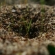 Ant Ants Insects On The Earth Movement Nature Works - VideoHive Item for Sale