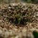 Ant Ants Insects On The Earth Movement Works Nature - VideoHive Item for Sale