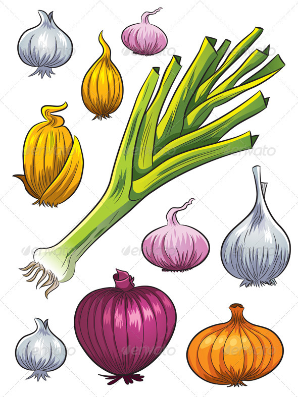 Onion Collection - Organic Objects Objects