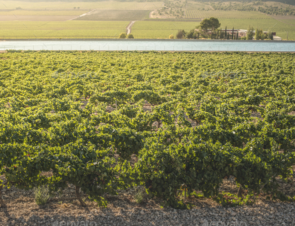 Vineyards and irrigation canal - Stock Photo - Images