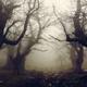 Tree of Dark Woods