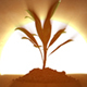 Growing Plant At Sunrise - VideoHive Item for Sale