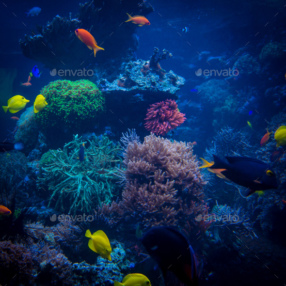 tropical fishes meet in blue coral reef sea water aquarium. Unde - Stock Photo - Images