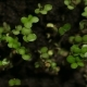 Growing Green Plants Agriculture - VideoHive Item for Sale