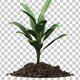 Plant Tree Growing Seedling In Soil - VideoHive Item for Sale
