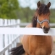 Brown Horse On The Farm - VideoHive Item for Sale